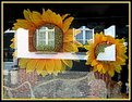 Picture Title - Sunflower in shop window