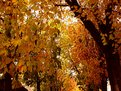 Picture Title - autumn in pavia