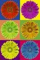 Picture Title - Colors