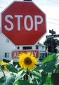 Picture Title - Stopflower
