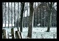 Picture Title - Snowing