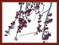 Picture Title - Malus red sentinel