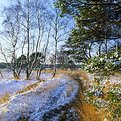 Picture Title - Snowy Heather
