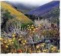 Picture Title - Wildflower Vista