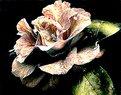 Picture Title - Carmelia