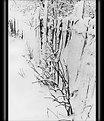 Picture Title - Winter's graphic. More snow...
