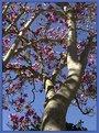 Picture Title - Spring 2004 in California. Magnolia.