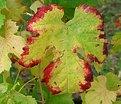 Picture Title - Autumn colors - 3