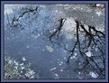 Picture Title - Iced reflection