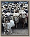 Picture Title - Counting sheep