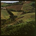 Picture Title - Green Italian hills posters