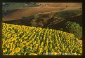 Picture Title - Toscana landscapes posters