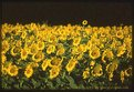 "Picture Title - The gira""solo"", Tuscany Landscape"