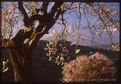 Picture Title - Photo art limited edition  Italian Landscape