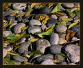 Picture Title - Stones and autumn