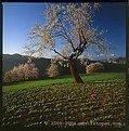 Picture Title - Italian landscapes 2004