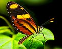 Picture Title - Sumptuous butterfly