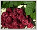 Picture Title - Raspberry(1)