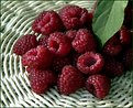 Picture Title - Raspberry(2)