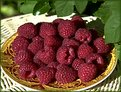 Picture Title - Raspberry(3)