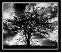 Dead tree (B/W ver)