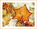 Picture Title - Golden Leaf