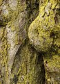 Picture Title - Treeforms