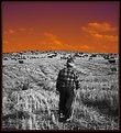 Picture Title - shepherd