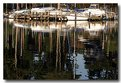 Picture Title - Severn River Reflections