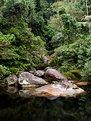 Picture Title - Rain Forest