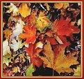 Picture Title - Autumn Carpet