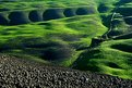 Picture Title - green.......!!!!