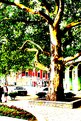 Picture Title - Tree and Boulevard