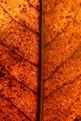 Picture Title - L'automne 2004