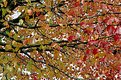 Picture Title - Fall Colours I