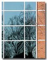 Picture Title - Fun-House Mirror Trees