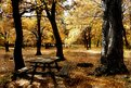 Picture Title - Autumn dream