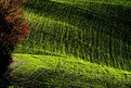 Picture Title - Grass......