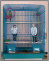 Picture Title - Birdcage
