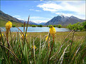 Picture Title - Alpine Summer