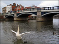 Picture Title - Dancing Swan