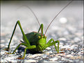 Picture Title - ~Green Alien~