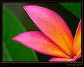 The colors of Kauai