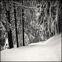 Picture Title - white day #3