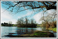 Picture Title - Duck Pond
