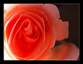Picture Title - Rosy Wonder!