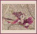 Picture Title - Seashore Art