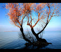 Picture Title - ALONE TREES