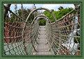 Picture Title - Network Bridge