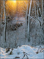 Picture Title - Winter Glow